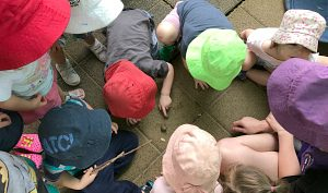 outdoors toddlers glandore child care